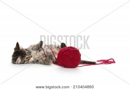 Tabby And Red Yarn