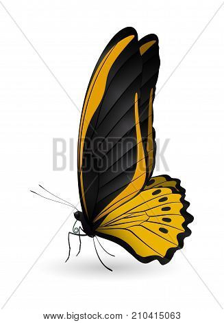 Beautiful butterfly isolated on a white background. Cairns birdwing butterfly. 3D illustration