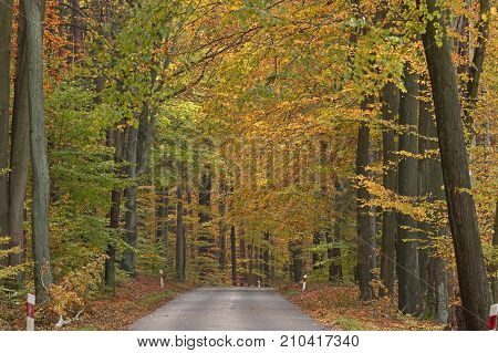 Hardened asphalt road. Peeled with a layer of brown, fallen leaves. Both sides grow tall, deciduous forest. It is autumn. The leaves on the trees are green and brown in color. It's daytime.