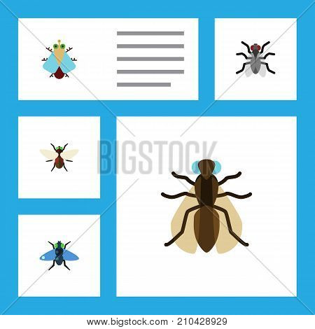 Flat Icon Housefly Set Of Tiny, Mosquito, Dung And Other Vector Objects