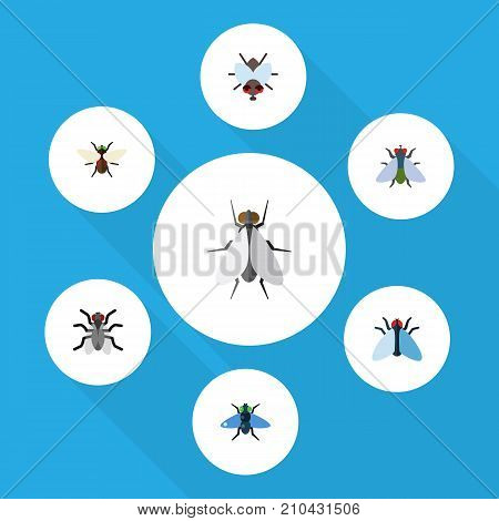 Flat Icon Housefly Set Of Fly, Dung, Buzz And Other Vector Objects