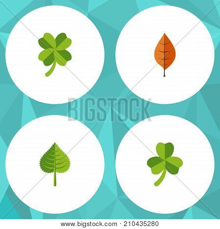 Flat Icon Foliage Set Of Hickory, Leaf, Leafage And Other Vector Objects