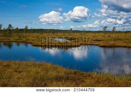 Amazing Pond Landscape In Nigula Reserve