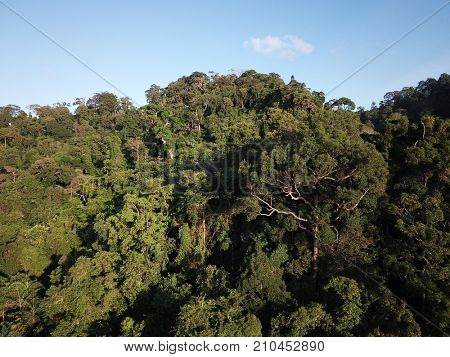 Rainforest. Aerial photo of forest jungle