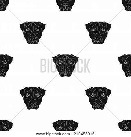 Dog breed, Stafford.Muzzle of Stafford single icon in black style vector symbol stock illustration .