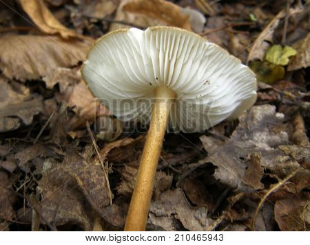 Forest mushroom photo. Very beautiful image