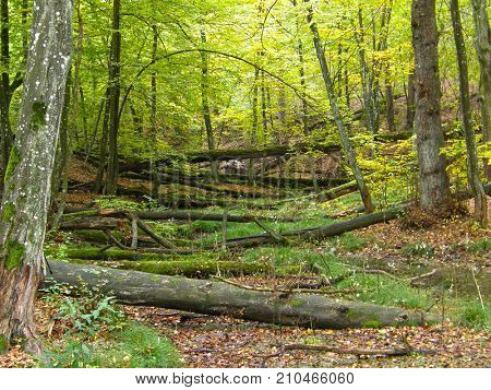 Fallen trees in the forest. Very beautiful image.