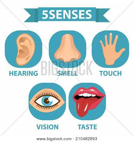 5 senses icon set. Touch, smell, hearing, vision, taste Isolated on white background Vector illustration