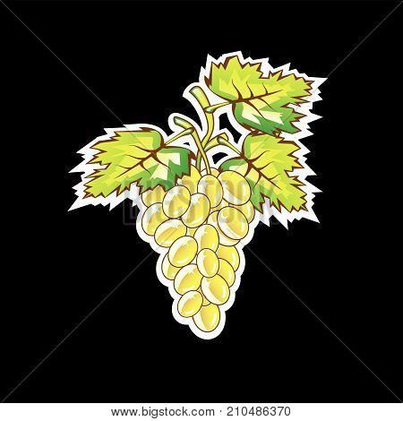 Golden grapes vector illustration clip-art image eps