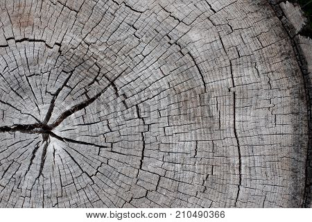 the Stump with cracked wood.wood stump texture