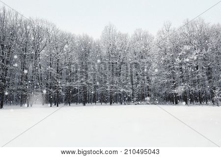 Winter snow covered forest. Beauty nature background