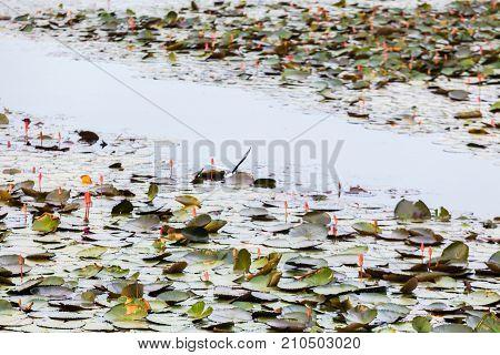 Seagull Fly On Vast Lake