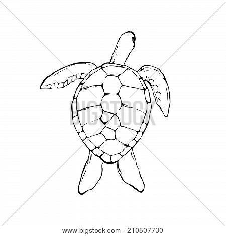 turtle Icon, turtle Icon Eps10, turtle Icon Vector, turtle Icon Eps, turtle Icon Jpg, turtle Icon Picture, turtle Icon Flat, turtle Icon App, turtle Icon Web