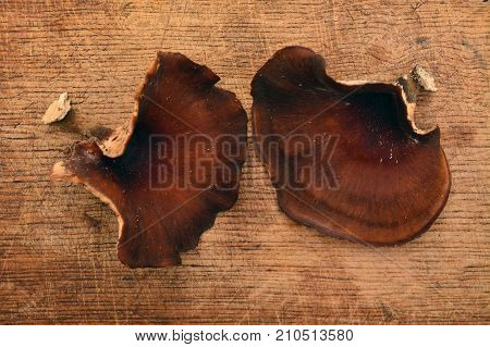 royoporus badius mushroom also known as picipes badius or the black foot polypore