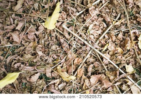 Dry leafs in the late autumn without rains