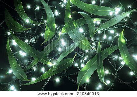 Fairy Lights and Gum Tree Leaves on Black Background