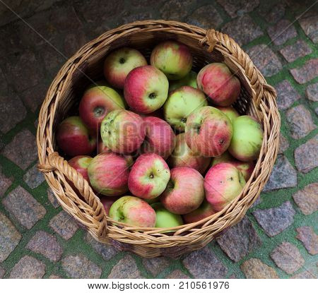 a basket of apples on the ground