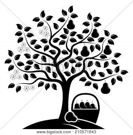 vector pear tree in two seasons and basket of pears isolated black and white background