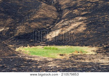 Hillside charred by the wild fire that raged through Napa and Sonoma counties in California fence along left side and a small patch of green grass spared from the inferno
