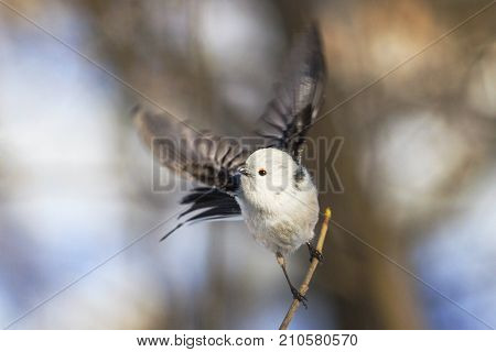 small fluffy bird flew from the branch , wildlife, animals