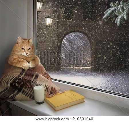 The cat sits on the windowsill. Outside the window is winter.