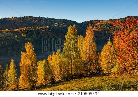 Forest With Yellow Foliage On Hillside