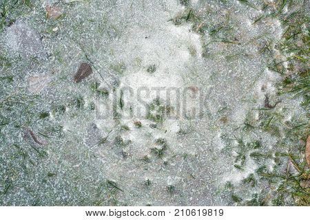The Grass Is Frozen In Ice, The Texture Of Frozen Water