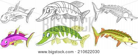 Cartoon underwater animals set. Furcata pike and sturgeon fish. Coloring book pages for kids.