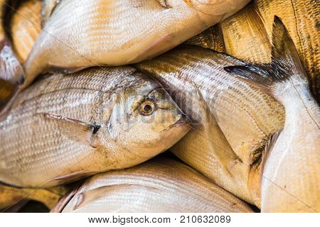 Fresh Fish Ready For Sale
