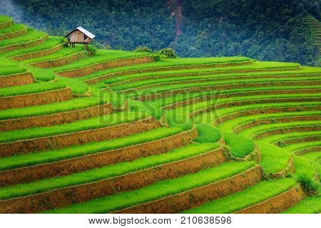 Beautiful scene of rice fields and terrace on daylight sunshade at Sapa Vietnam