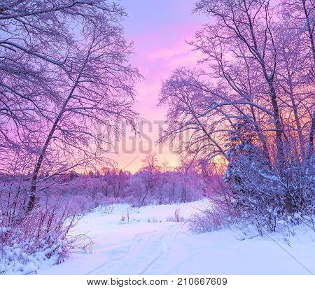 winter panorama landscape with forest trees covered snow and sunrise. winterly morning of a new day. purple winter landscape with sunset panoramic view