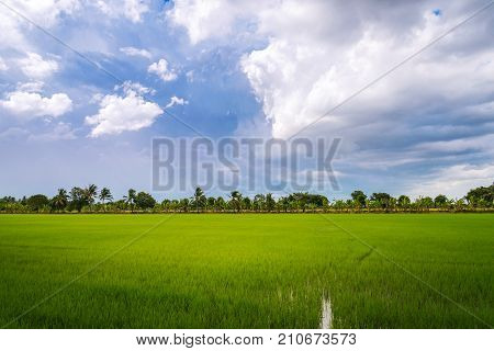 overcast over rice field before rain storm. Natural background