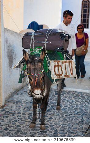 Donkey Transports The Luggage In Santorini