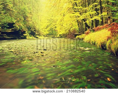 Autumn Landscape, Colorful Leaves On Trees, Morning At River After Rainy Night. Colorful Leaves.