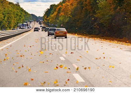 Road with moving cars surrounded by autumn trees and yellow leaves flying to the asphalt.