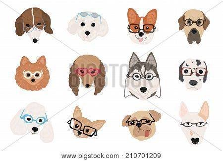 Collection of cute dogs of various breeds wearing glasses and sunglasses of different styles. Bundle of funny cartoon pet animal faces or heads isolated on white background. Vector illustration