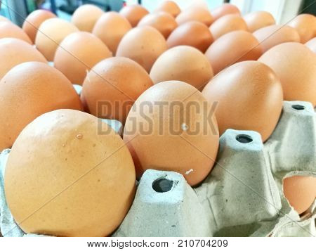 Organic chicken egg good source of protein iron phosphorus vitamin B amino acids vitamins minerals needed for our healthy skin hair,eyes,red blood and cell membranes.