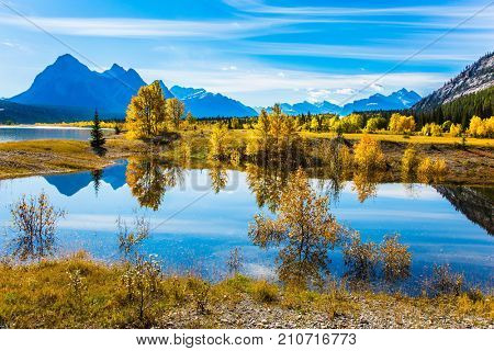 The concept of ecological and active tourism. Sunny autumn day in the Rocky Mountains of Canada. The artificial Abraham lake reflects light cirrus clouds and trees