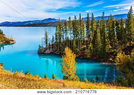 Abraham Lake is the most beautiful lake in the Rockies of Canada. Dense forests cover the lake shores. Warm sunny day in autumn, Indian summer. The concept of ecological and active tourism