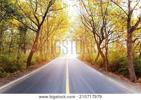 empty asphalt road with green trees with sunbeam