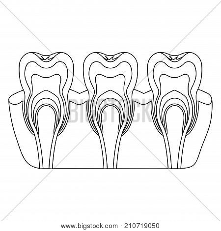 teeth with nerve and tooth root view monochrome silhouette vector illustration