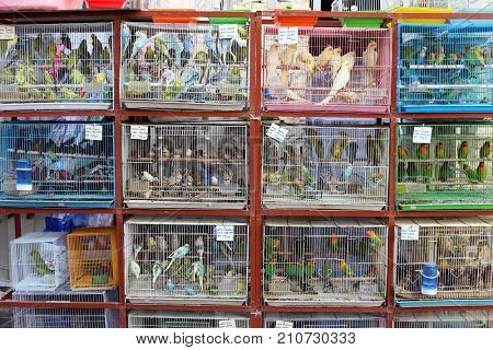 SOUQ WAQIF, DOHA, QATAR - OCTOBER 23, 2017: Piles of cages in the pet shop area of Souq Waqif in Qatar, Arabia.