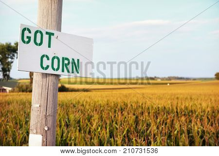Got Corn sign by a cornfield