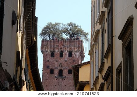 LUCCA, ITALY - JUNE 03: Guinigi Tower with oak tree garden on the rooftop in Lucca, Tuscany, Italy on June 03, 2017.