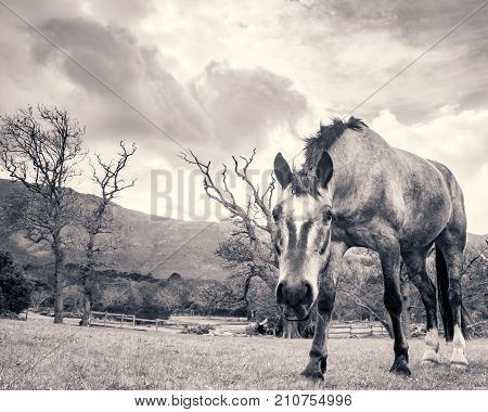 A horse stares at the camera inquisitively