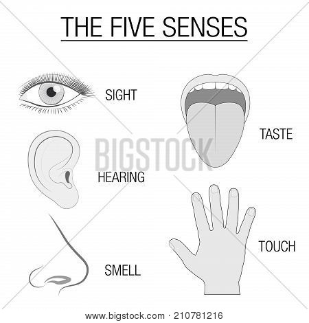 Eye, ear, tongue, nose and hand - five senses chart with sensory organs and appropriate designation sight, hearing, taste, smell and touch - schematic isolated vector illustration on white background.