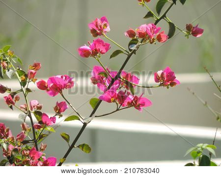Pink flowers on the branch with green leaves