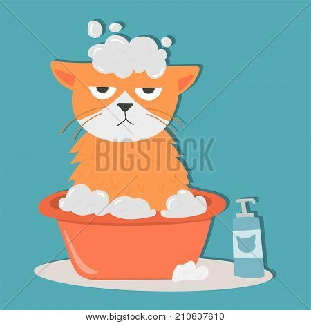 Portrait cat animal bathe pet cute kitten purebred feline kitty domestic fur adorable mammal character vector illustration. Prettyfunny tabby beautiful cat.