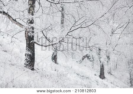 Rest on the winter nature. Beautiful winter nature landscape. Beautiful winter nature. Snow-covered trees in nature. Winter time in nature. Beautiful white snowy nature background