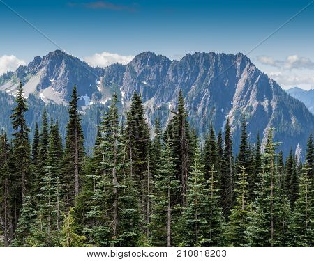 Evergreens And Mountains In Mount Rainier